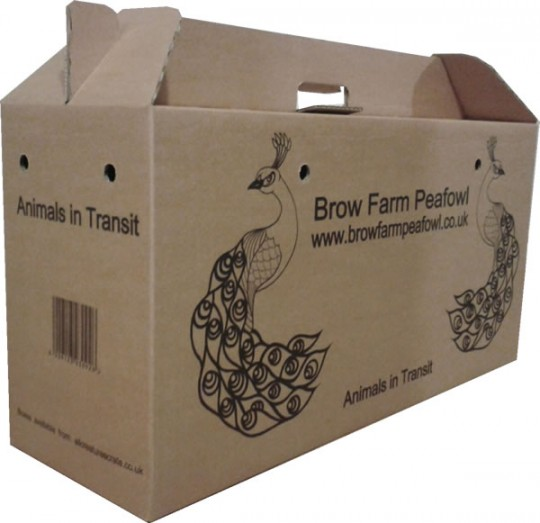 Pet Transport Box made from cardboard